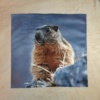 Beige - Marmotte